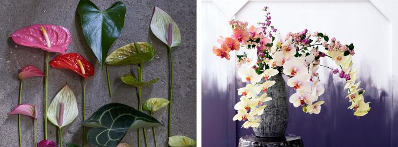 bloeiende-kamerplanten-heerlen-venlo-roermond-BIJStox