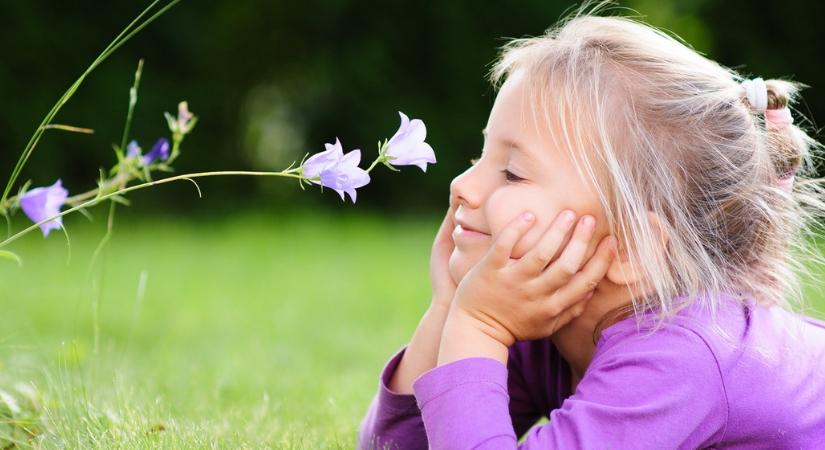 Koop eenjarige planten zoals Violen & Geraniums bijSTOX