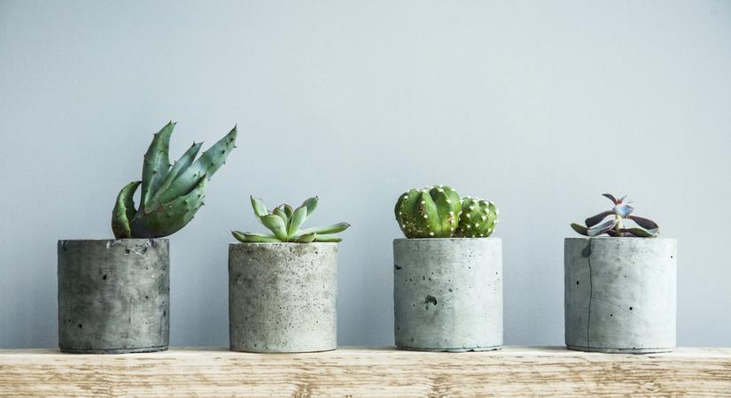 cactus of vetplant kopen