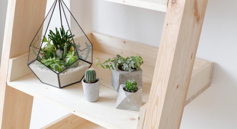 verschillende soorten cactussen kopen