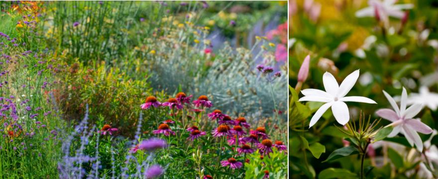 Vaste planten kopen | bijSTOX